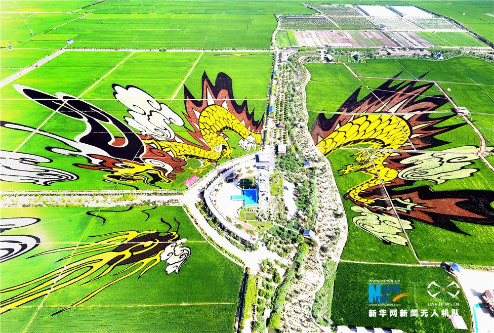 """沈阳稻梦空间将绿色农业与休闲旅游相结合,开发出大型""""3d稻田画"""",为"""