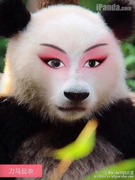 当熊猫不再画烟熏妆 我的世界观坍塌了