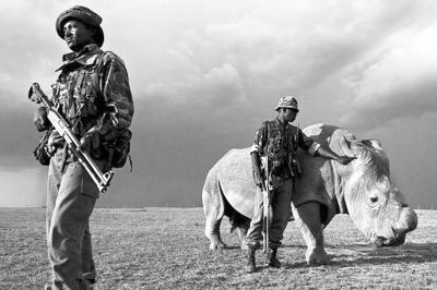 全球最后一头雄性白犀牛获24小时持枪保卫