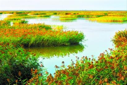 编制并严格执行湿地保护规划,加大对以红海滩,芦苇荡为主的8万公顷
