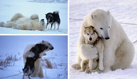 跨越种类的动物友谊__新华网辽宁频道