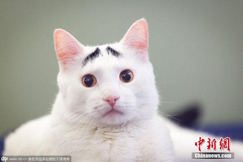 猫咪视频_猫咪搞笑视频抖音【相关词_ 猫咪搞笑视频】