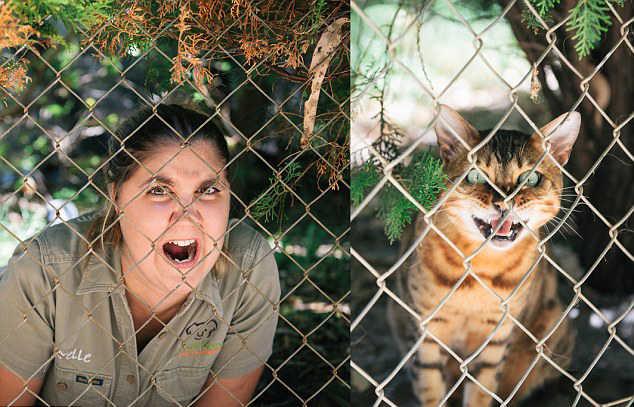 澳管理员模仿动物搞笑照片蹿红网络