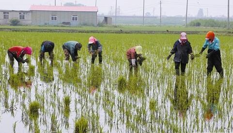 大連市推廣多項技術提高農業抗旱能力