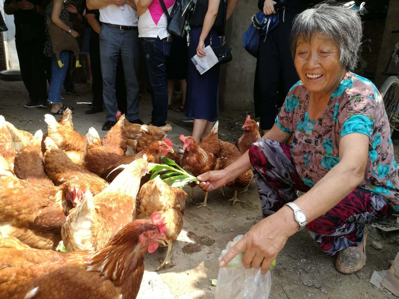 沈陽:89戶困難家庭的扶貧雞産蛋賣錢了