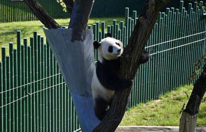 新华VR走进沈阳熊猫馆