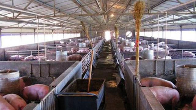 遼寧集中整治畜禽養殖業無證無照經營