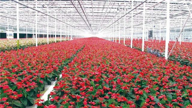 VR視角走進園林園藝花卉産業展覽會