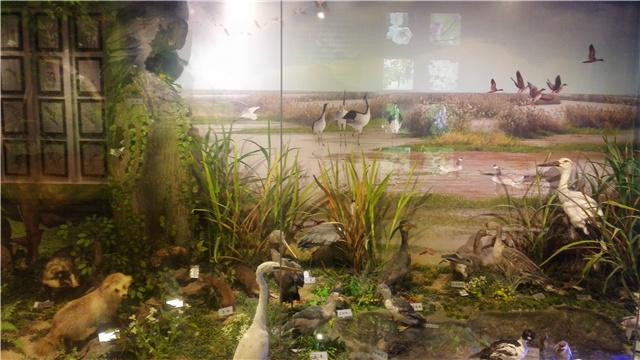 VR視角走進遼寧環境監測生物標本館