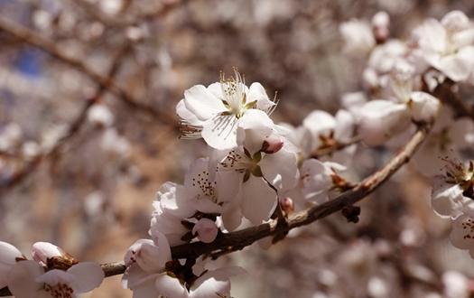 沈阳:花开报春来