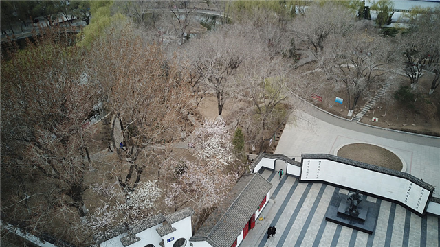 航拍沈阳鲁迅公园 春暖花开柳叶嫩绿