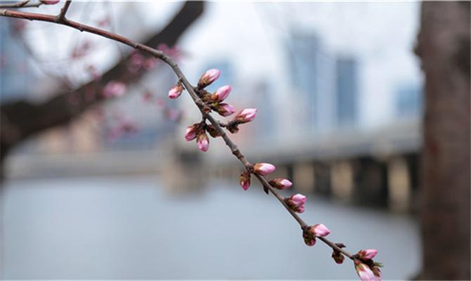 新華VR與您一起賞春風觀桃花