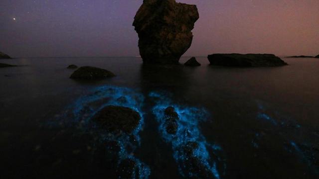 """大连小黑石现""""荧光海""""景观 泛出蓝色光芒"""