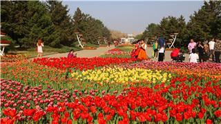 VR视角走进北陵公园与您共赏郁金香
