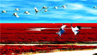 盤錦濕地成功孵化51只丹頂鶴