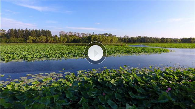 航拍沈陽龍潭湖700畝荷花競相盛開