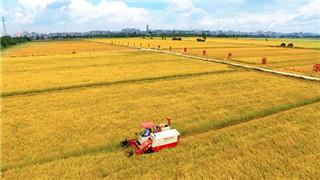 年底前辽宁农垦土地确权登记发证面积将超90%