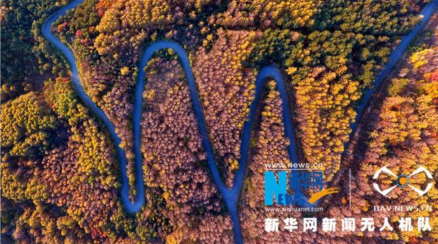 霜葉紅于二月花 航拍本溪桓仁楓林美景
