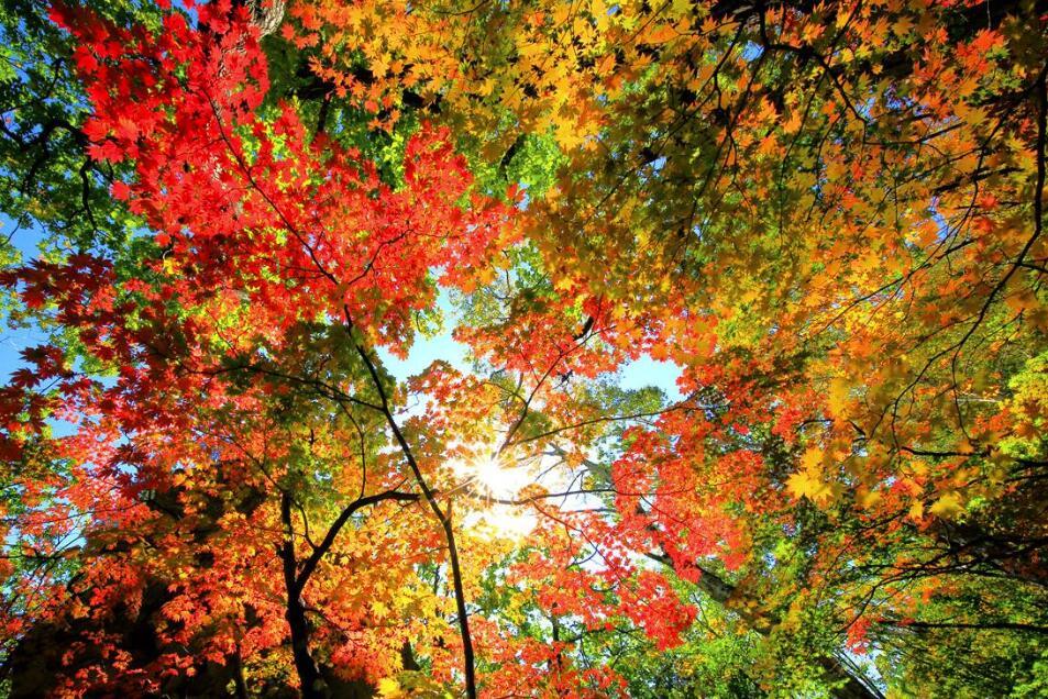 【視頻】本溪:楓葉紅似火 秋意韻味濃
