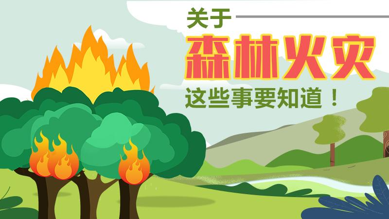 關于森林火災,這些(xie)事要(yao)知道