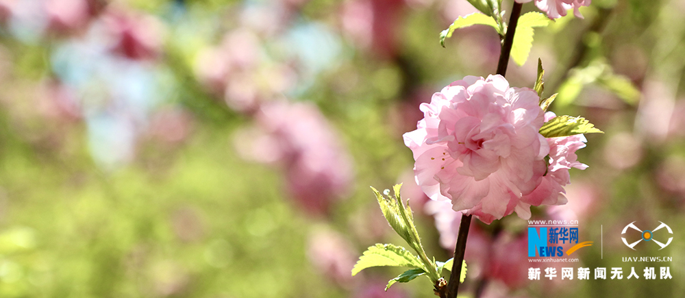 立夏|春去,夏已至