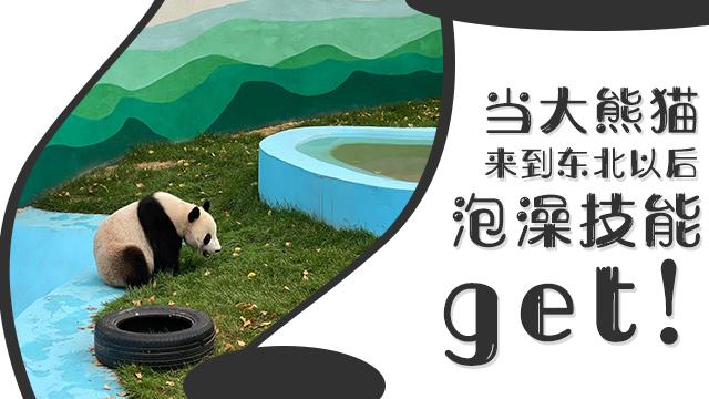 大熊貓來東北後Get泡澡技能