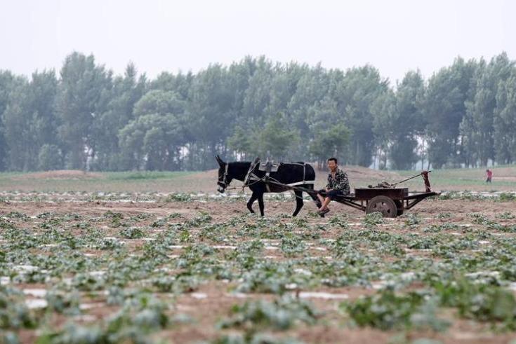 【視頻】遼寧中東部旱情解除 遼西旱情將加劇