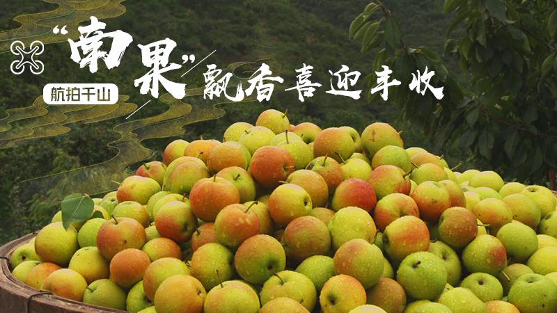 """""""南果""""飄香喜迎豐收"""