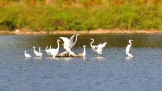 沈陽鳥島:人與鳥和諧共生