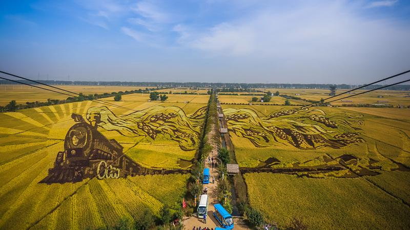 金秋十月稻米香 電影《我和我的家鄉》拍攝地遍布金黃稻田畫