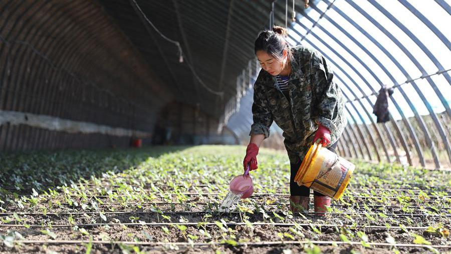 遼寧臺安:設施農業助增收