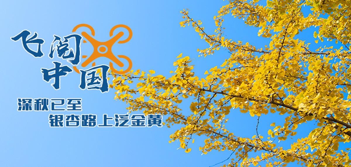 """""""瞰""""秋日丨深秋已至,銀杏路上泛金黃"""