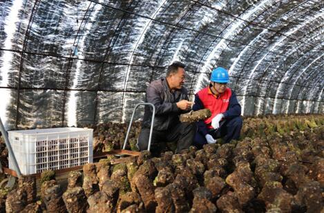 國網大連莊河供電公司助力萬億村走上致富路