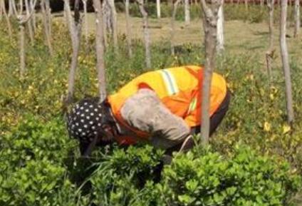 【視頻】錦州:園林綠化冬季養護全面開始