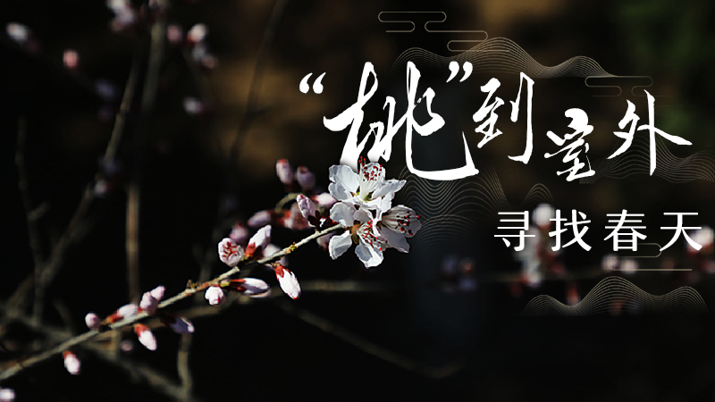 """【""""飛閱""""中國】""""桃""""到室外 尋找春天"""
