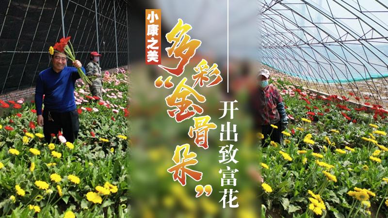 """【""""飛閱""""中國】多彩""""金骨朵""""開出致富花"""