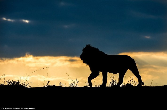 南非动物剪影优美画面