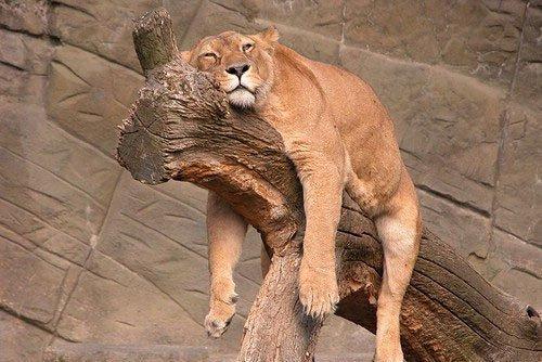 各种动物慵懒睡姿抓拍